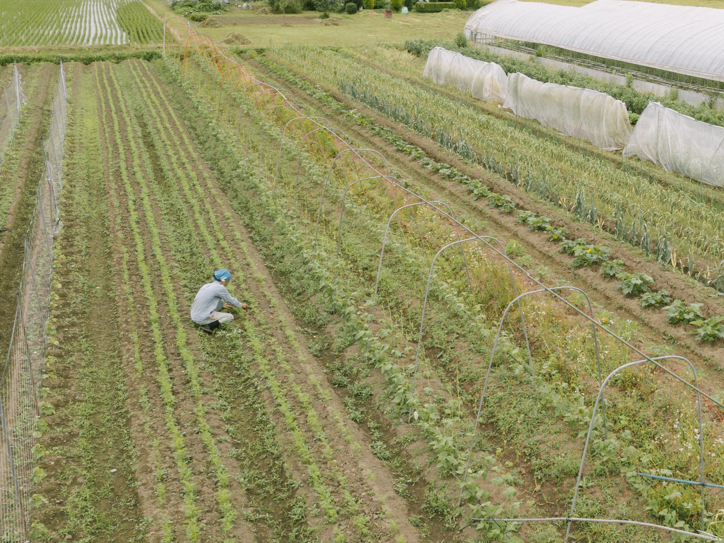 うたか自然農園畑全景